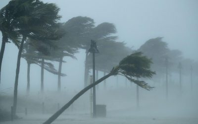 7 Steps to Prepare Your Business for the Hurricane Season